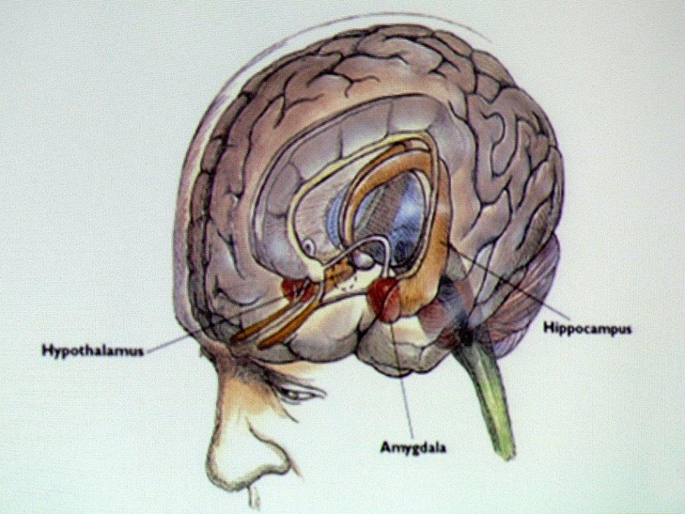 Lidský mozek fascinuje.