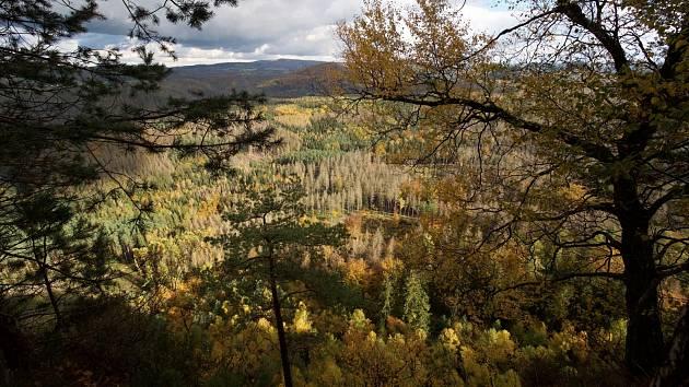 Celoroční ozonový stres, sucho a další znečištění životního prostředí poškozují lesní populaci stromů v pohořích