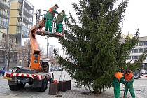 Na mosteckém náměstí je už vánoční strom.