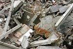 Vycvičený pes hledá život v rozvalinách.
