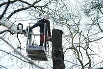 U silnice mezi Adamovem a Olomučany se budou kácet stromy. Ilustrační foto