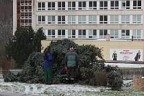 Vichr zlomil vánoční strom v Meziboří na Mostecku.