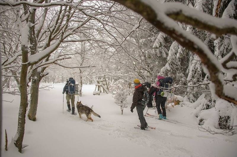 Hledají se dobrovolníci pro pozorování šelem v Krušných horách.