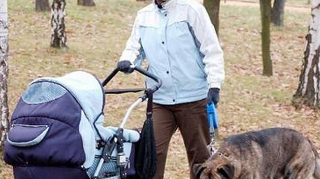 VŠE PODLE ŘÁDU. Adéla Zlatová vede psa na vodítku po chodníku na starém městském hřbitově v Mostě. Některým lidem se přítomnost psů poblíž hrobů nelíbí. Radní hájí zodpovědné chovatele.