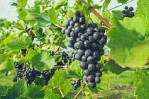 V Březně u Chomutova budou Vinné trhy.