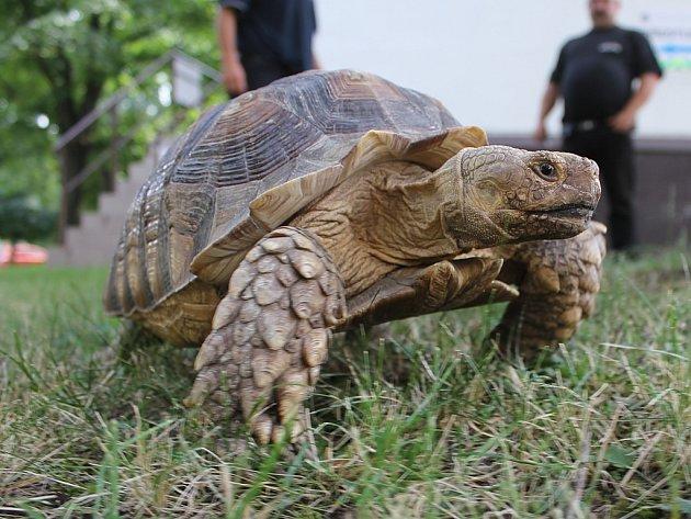 Nalezená želva.