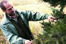 Lesník Jan Ferkl si prohlíží nemocný strom.