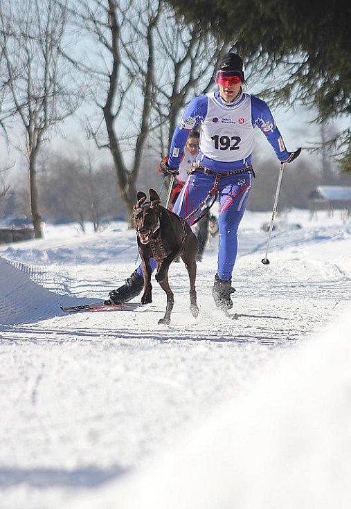Závody psích spřežení na Lesné na Mostecku.