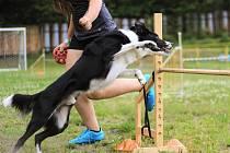 Cvičení se psy v Meziboří.