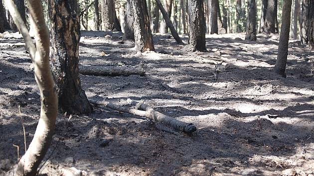 Část lesa nad autodromem vypadá jak z katastrofického filmu. Hasiči ho i po třech dnech museli kropit kvůli podzemnímu hoření.