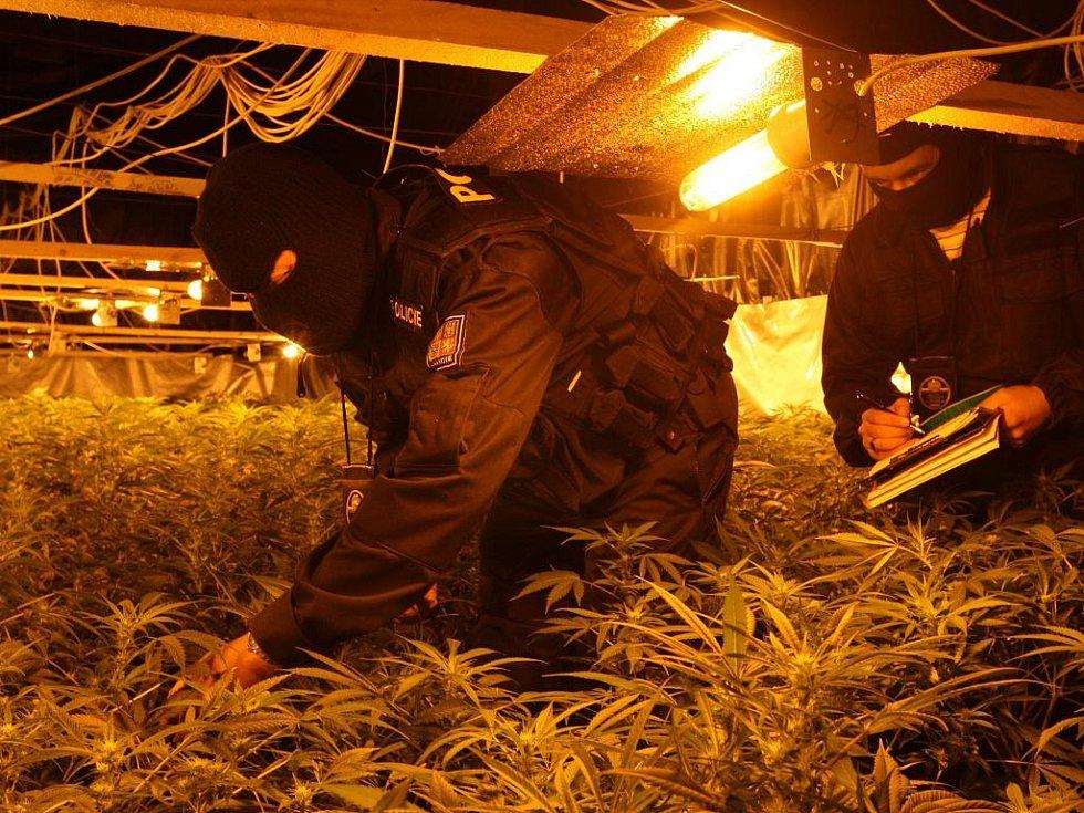 Několik tisíc rostlin marihuany objevili policisté ve velkopěstírně.