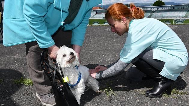 Na začátku června proběhne v Mostě očkování psů.