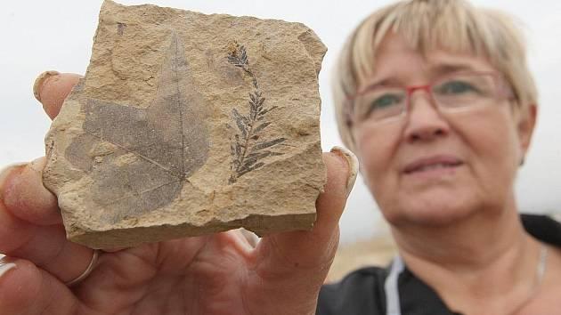 V bílinském dole lze nalézt zkamenělé pozůstatky rostlin.