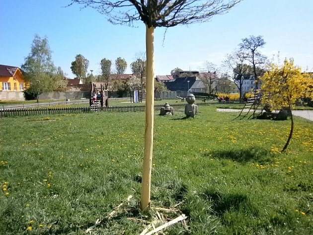 V benarské zahradě se vandal v dubnu zaměřil na mladé stromky.