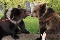 Během show vystoupí i medvědi.
