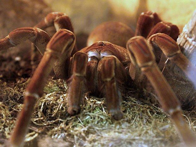 Výstava pavouků v Mostě.