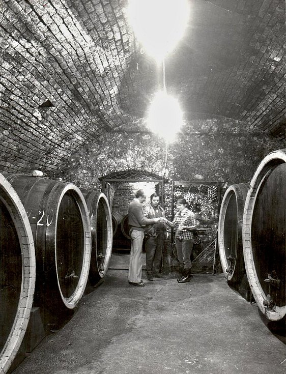 Historická fotografie z doby obnovy mosteckého vinařství.