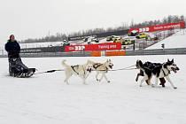Psí spřežení na zaváté závodní dráze, která slouží obvykle pro auta.
