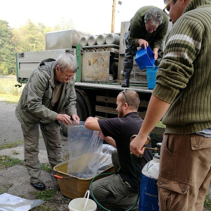 Podzim přinesl bohaté zarybnění vodních nádrží na Mostecku. Vysazeno bylo několik druhů ryb. Ovšem candátů bylo absolutně nejvíc, 19 350