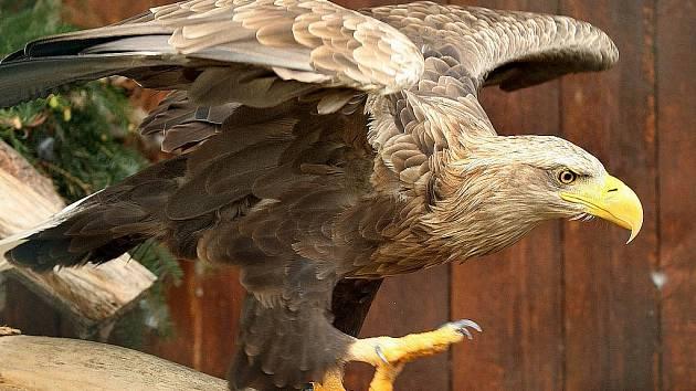 Ornitolog Jaroslav Bažant pozoroval nad jezerem Most i vzácného orla mořského.