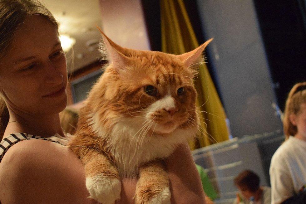 Mezinárodní výstava koček v Repre.