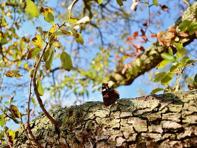 Podzim v Mostě