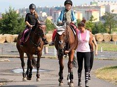 Děti se na táboře učí starat o koně.