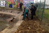 Strážníci zachránili dva psy z požární nádrže