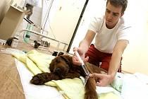 Patrik Cmorej ošetřuje ztýrané štěně setra.