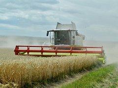 Zemědělci z mostecké okresní agrární komory musejí letos sklidit 11 895 hektarů, z toho 8945 hektarů obilovin a 2950 řepky.