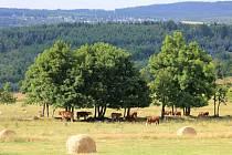 Nová Ves v Horách získala v roce 2011 zlatou stuhu. Její okolí láká turisty.