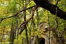 Ještě v sobotu je poslední možnost poslat fotky do akce SVČ v Mostě Podzimní toulky přírodou.