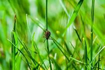 Klíšťata nepodceňujte ani s příchodem podzimu. Následky boreliózy pomohou zmírnit bylinky.