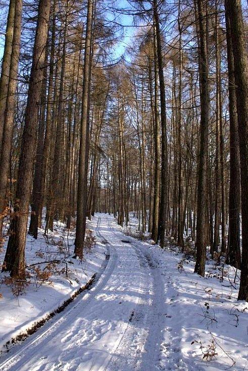 Zimní příroda.