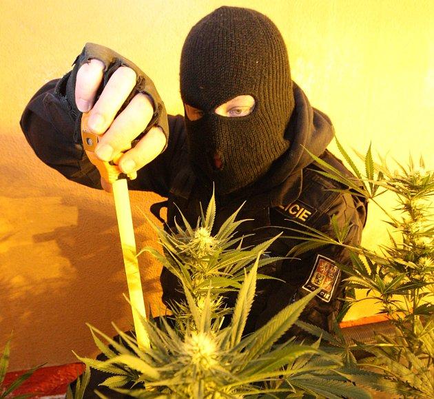Kriminalisté odhalili pěstírnu marihuany v Šantánu