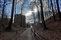 Ulice Tylova v Litvínově sousedí s lesem, který patří do katastru Meziboří.
