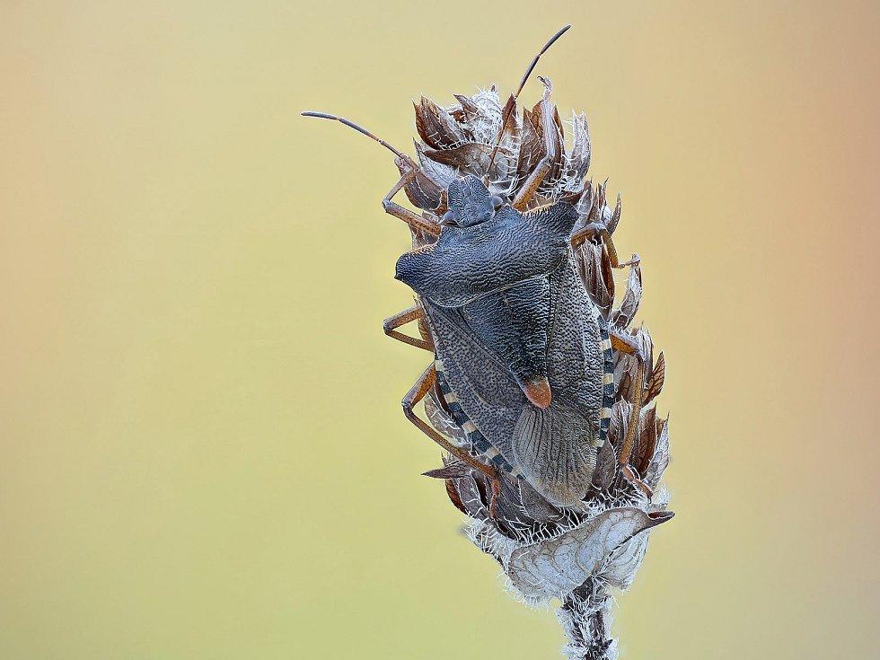 Fotografie hmyzu