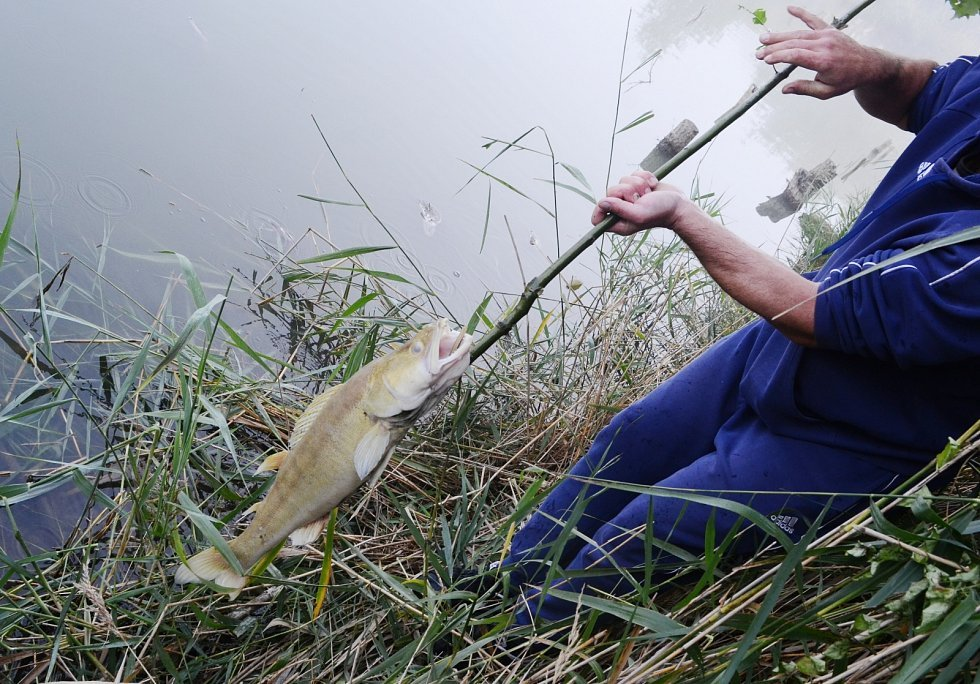 I ve čtvrtek 1. října ráno byly ve Farském rybníku na Mostecku mrtvé ryby.