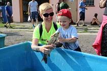 Deváté Rybí slavnosti, které se v sobotu uskutečnily v sádkách areálu v Litvínově na Pavlu.
