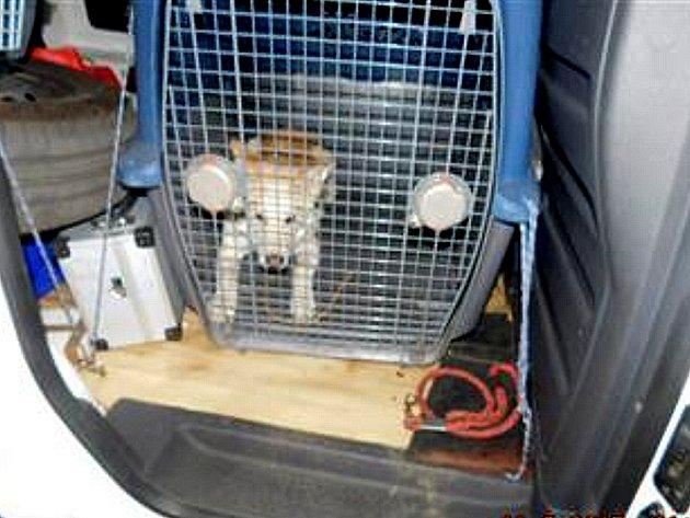 Pes odchycený u mostecké herny
