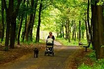 """""""Večer se tu cítím bezpečněji, ale hlavně když mám s sebou psa,"""" řekla v parku Šibeník v Mostě 33letá Markéta. Ve dne jí bylo v parku vždy dobře, teď jí ale přijde klidnější."""