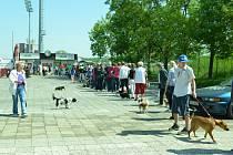 Bezplatné očkování psů proti vzteklině v Mostě.