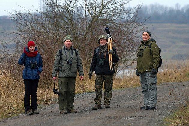 Členové Ornitoklubu při Oblastním muzeu v Mostě sčítali vodní ptáky u Jezera Most.