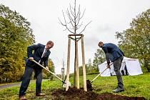 V parku Šibeník v Mostě se objeví 110 nových stromů. Jeden ze stromů společně zasadili ve středu 14. října primátor Jan Paparega a Tomáš Herink, člen představenstva skupiny Unipetrol.