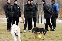 Mostečané zažili během přípravy i legrační chvilky, to když jeden z tréninků navšívili psi. Žáka to rozesmálo.