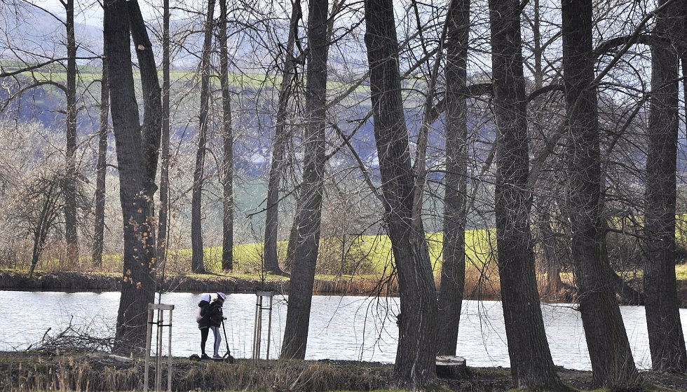Rybník v obci Lužice