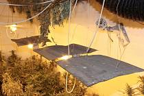 Policisté objevili další pěstírny marihuany.