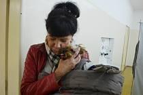Alena Dernerová se mazlí s Poppy na prahu volební místnosti v mosteckém gymnáziu.