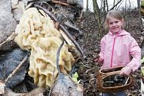 Houbaři vyrazili do lesů u Litvínova. Roste třeba smrž, oceňovaný gurmány.