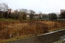 Vyschlý Pilařském rybník v létě minulého roku